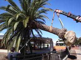Picking the Best Tree Removal Service Providers